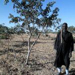 Marquage des arbres protégés à travers la Régénération Naturelle Assistée