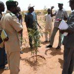 Mission conjointe de suivi des plantations du projet Reverdir Mopti par la DNEF, le SIFOR et Sahel Eco